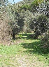 sentiero per il passo di dante