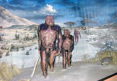 diorama con australopitchi